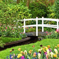 Tips voor het aanleggen van een nieuwe tuin